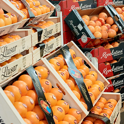 Orange Llusar