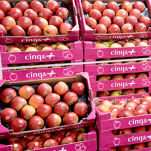 Pomme Cinq&Plus